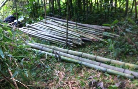 2015年 第10回 竹の切り出しと野菜収穫